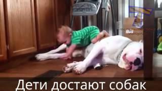 Дети достают животных! Смех до слез!!