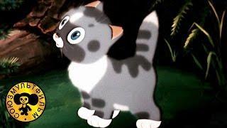 Непослушный котенок | Советские мультики сказки для детей