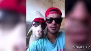 ПОПРОБУЙ НЕ ЗАСМЕЯТЬСЯ - Смешные Приколы и фейлы с Животными до слез, Смешные козлы, Funny goats #91