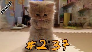 Смешные Коты СО СЛЁЗ Приколы с котами и котиками 2019 Смешные кошки Funny Cats