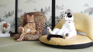 ПОПРОБУЙ НЕ ЗАСМЕЯТЬСЯ - Смешные Приколы и фейлы с Животными до слез, смешные коты #90