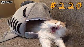 Смешные коты и котики 2019,  приколы про котов до слез – Смешные кошки – Funny Cats 2019