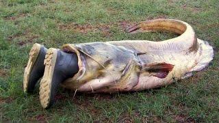 Видео подборка приколов - случай на рыбалке. Как поймать рыбу? Русская рыбалка. Рыбалка с лодки.