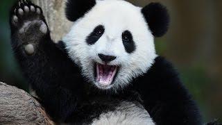 Приколы с животными и детьми/Лучшие приколы 2017/ ДО СЛЁЗ / САМОЕ СМЕШНОЕ
