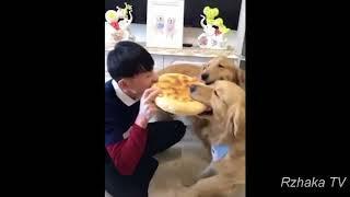 ПОПРОБУЙ НЕ ЗАСМЕЯТЬСЯ - Смешные Приколы и фейлы с Животными до слез, смешные собаки #88