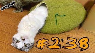 Смешные Кошки ДО СЛЁЗ Приколы с котами и котиками 2019 Смешные коты Funny Cats