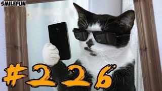 Смешные КОШКИ и котики,  приколы про котов до слез – Смешные КОТЫ 2019 – Funny Cats