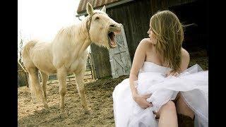 Смешные лошади, ПРИКОЛЫ С ЛОШАДЬМИ,  Funny horses Compilation