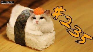 КОТЫ 2019 Смешные приколы с котами  и котиками до слёз Смешные кошки 2019 Funny Cats