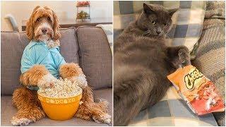 Я РЖАЛ ПОЛ ЧАСА. Смешные Коты и Собаки. ПРИКОЛЫ С  ЖИВОТНЫМИ. Cute Cats #130
