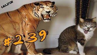 КОШКИ 2019 Смешные Коты 2019 приколы про котов с котами ДО СЛЁЗ Funny Cats Выпуск 239