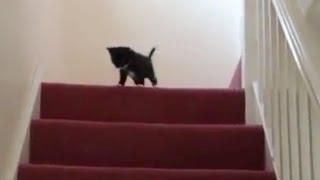 Смешное видео про животных. Животные на лестнице смешно до слез